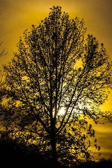 Tree, Sun, Landscape, Sky, Twilight, Sunset, Colorful