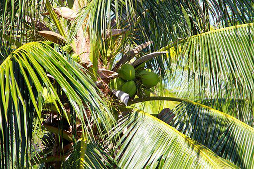 Thailand, Rainforest, Nature, Forest, Tropical, Green