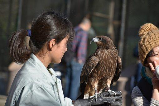 Animal, Bird, Raptor, Video, Zoo, People, Women, Girls