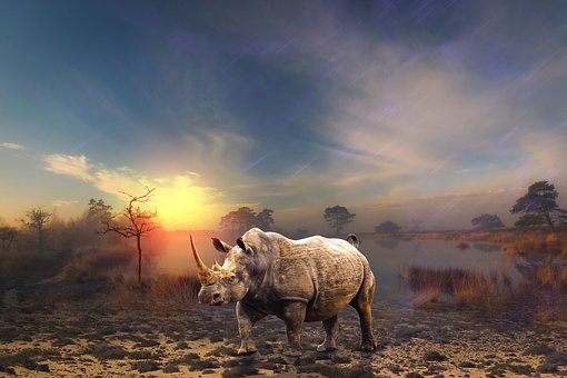 Animal, Wild Animal, Africa, Rhino, Animal World, Horn