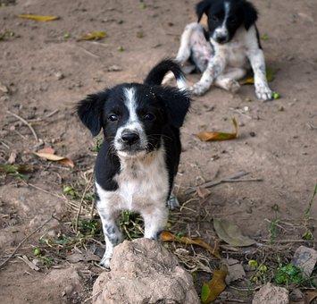 Dog, Puppy, Pet, Animal, Cute, Young, Adorable, Sad