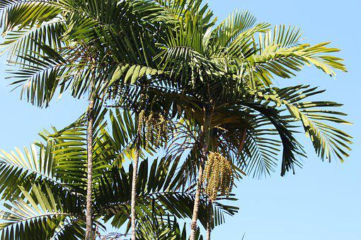 Palm Trees, Sky, Summer, Journey, Tropical, Exotic