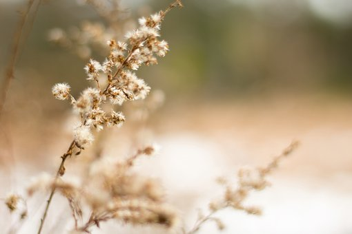 Plant, Fall, Nature, Flora, Sunny, Meadow, Yellow