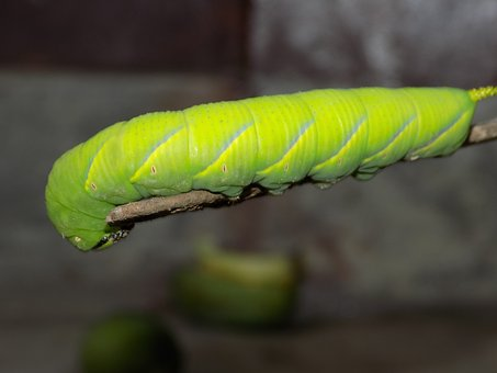 Green, Insect, Dark