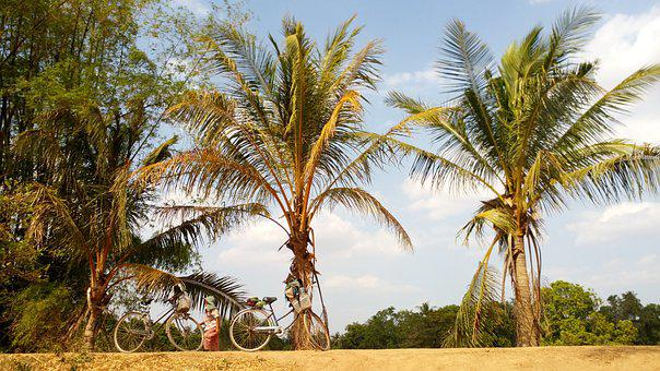 Cambodia, Island, Palm Trees