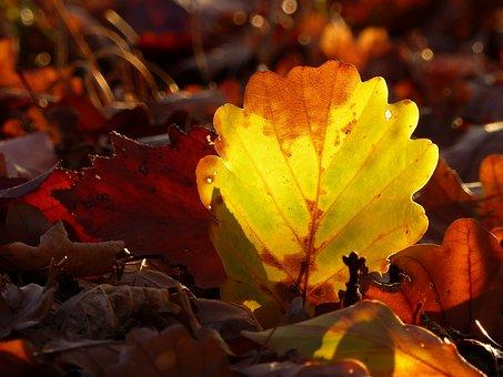 Autumn, Leaves, Leaf, Colorful, Autumn Colours, Mood