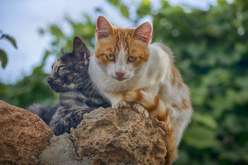 Cat, Stone, Look, Portrait, Feline, Curious