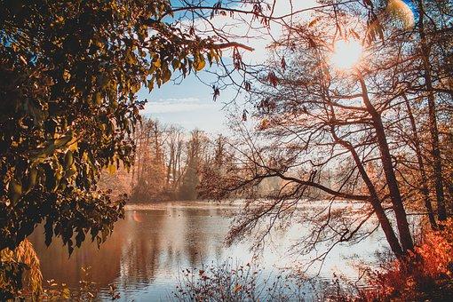 Pond, Park, Sun, Cold, Beginning Of Winter, Mood, Quiet