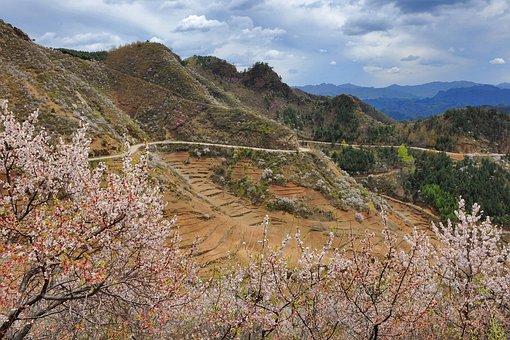 Flower, Mountain, Wild Flowers, Grass, Plant, Valley