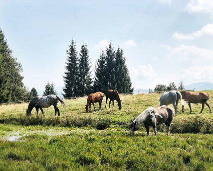 Horses, Mountains, Outdoor, Landscape, Magic, Pasture
