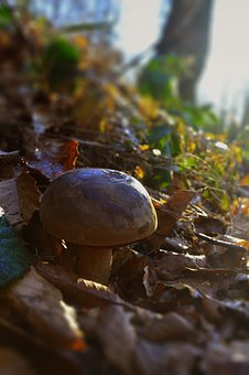 Fungus, Forest, Autumn, Trail, Foliage, Nature