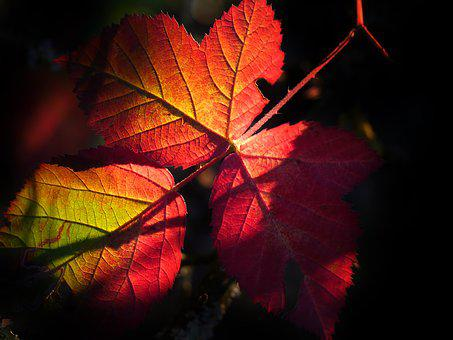 Leaf, Fall, Nature, Colorful, Light, Atmospheric, Sun