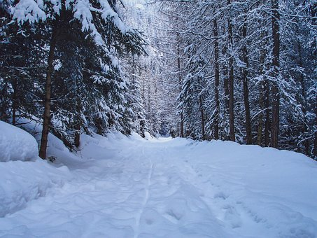Walking Path, Snow, Trees, Winter, Nature, Forest