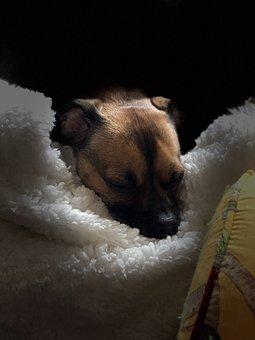 Pet, Dog On Soft Blanket, Sad Dog, Sweet Dog