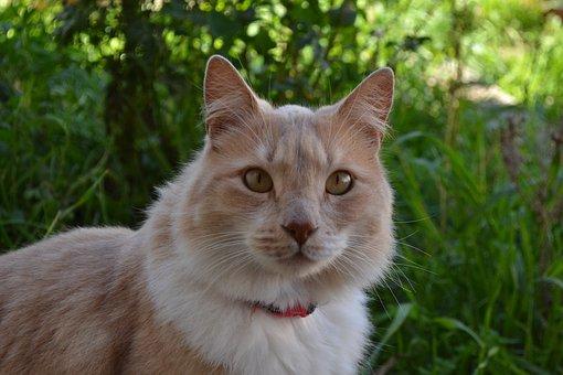 Cat, Look, Animal, Eyes, Portrait, Pets, Kitty, Feline