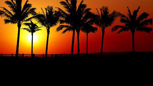 Sunset, Palm Trees, Promenade, Sky, Holiday, Romantic
