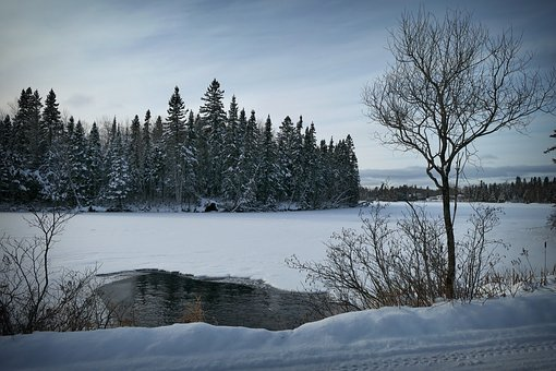 Landscape, Nature, Winter, Water, Snow, Cold, Forest