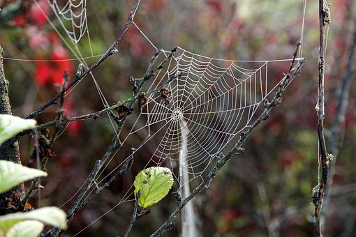 Spider Web, Dry, Branch, The Bushes, Summer, Green