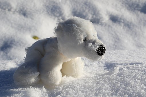 Bear, White Bear, Nature, Cute, Toys, Childhood, Fresh