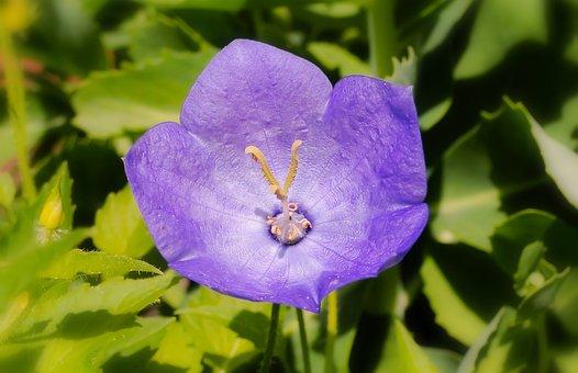 Flower, Violet, Posts, The Petals, Plant, Garden