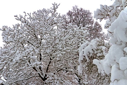 Winter, Snow, Tree, Landscape, Cold, Wintry, Nature