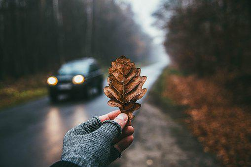 Leaf, Dry, Autumn, Scenery, Atmosphere, Mood