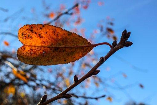 Leaf, Sun, Sky, Light, Autumn, Autumn Leaf