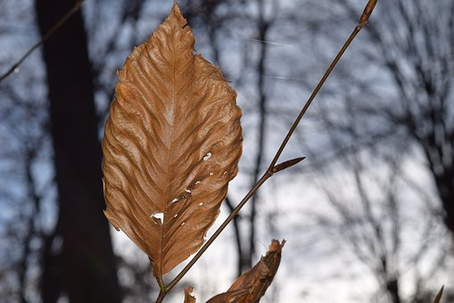 Leaf, Autumn, Brown, Trees, Fall, Season, Light, Bright