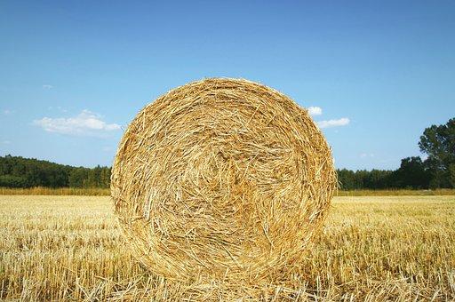 Straw, Bela, Agriculture, Harvest, Field, Cereals