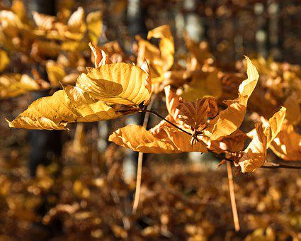 Leaves, Branch, Autumn, Fall Color, Bright, Brown