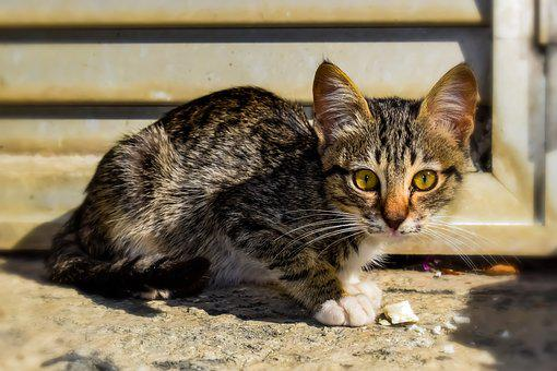 Cat, Small, Young, Cute, Animal, Kitten, Curious, Eyes