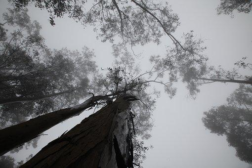 Trees, Cloudy, Clouds, Fog, Cups, Landscape, Tree