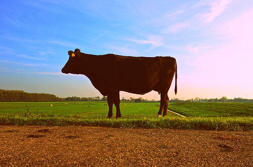 Cow, Animal, Mammal, Standing, Profile, Dike, Meadow