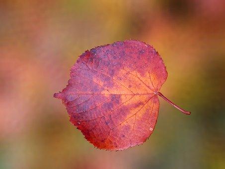 Autumn, Autumn Leaf, October, Fall Color, Emerge