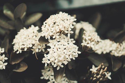 Flower, Petal, Love, Floral, Macro, Pink, Noble, Orange