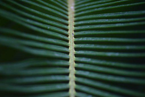 Foliage, Green, Plant, Background, Leaves, Natural
