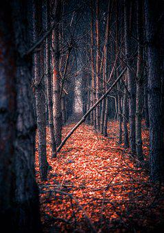 Tree, Forest, Foliage, Mood, Atmosphere, Forests