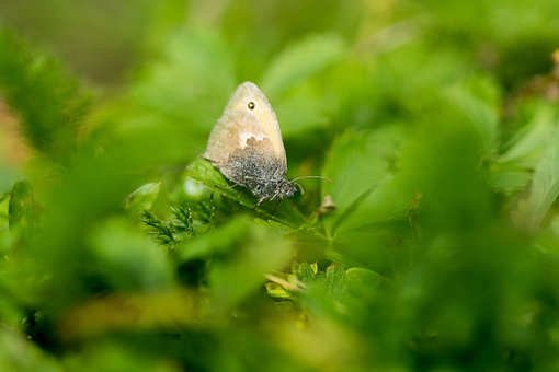 Butterfly, Green, Leaves, Summer, Nature, Wing, Macro
