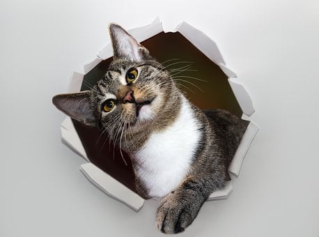 Cat, Pet, Hole, Wall, Paper, Torn, Animal, Domestic Cat