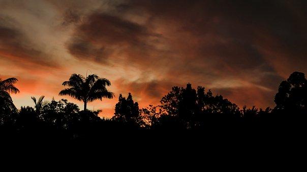 Horizon, Clouds, Sunset, Sunrise, Palm Tree, Angels