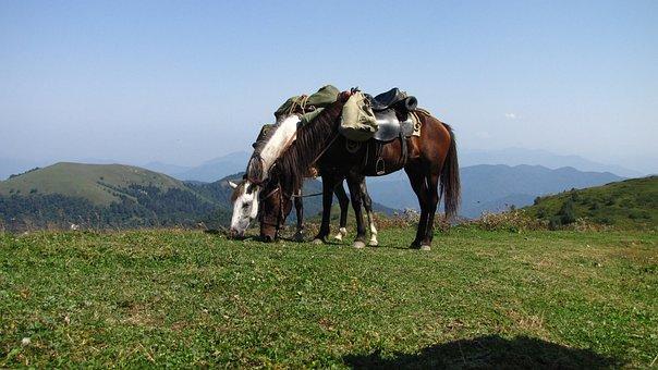 Georgia, Rally, Horse Riding, Borjomi