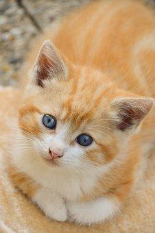 Kitten, Cat, Feline, Cute, Animals, Adorable, Fur