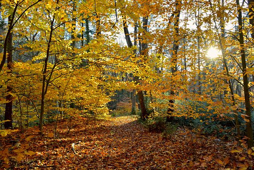 Foliage, Leaves, Autumn, Colorful, Yellow, Golden