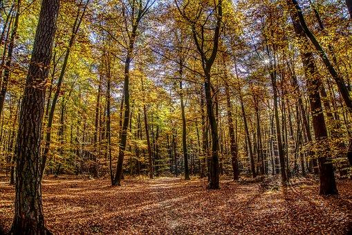 Forest, Trees, Leaves, Autumn, Mood, Light, Landscape