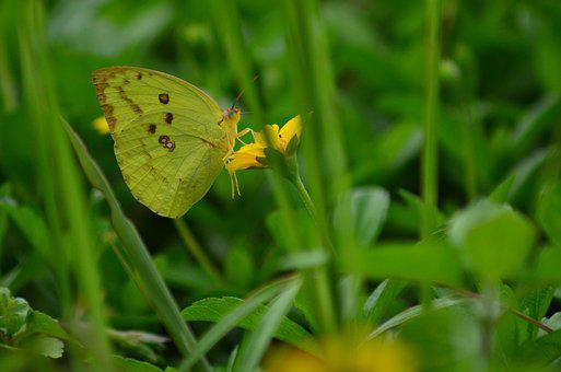 Macro, Butterfly, Flower, Insect, Beautiful, Nature