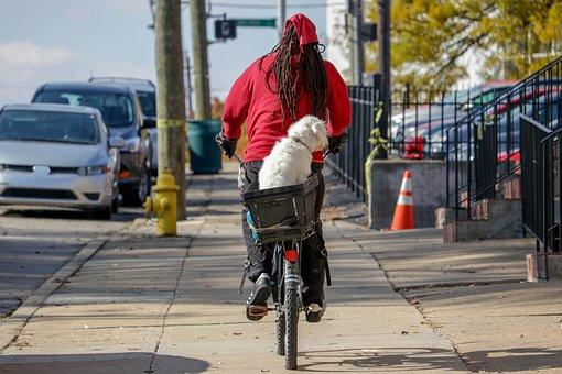 Bike, Man, Dog, Lifestyle, Transportation, Sport, Male