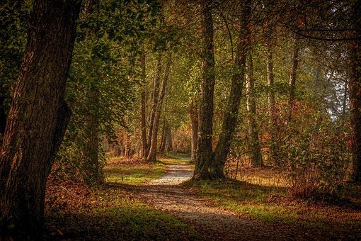Forest, Forest Path, Autumn, Trees, Away, Path, Mood