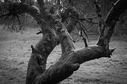 Tree, Black And White, Nature, Forest, Black, Fog