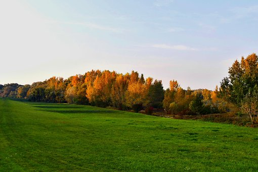 Meadow, Forest, Nature, Autumn, Pastures, The Sky