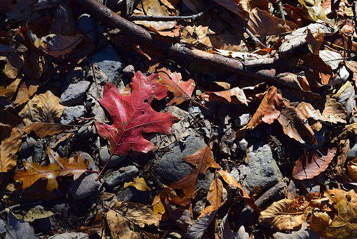 Foliage, Leaves, Autumn, Colorful, Red, Golden, Brown